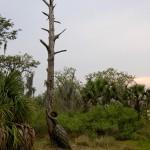 Pining by Leslie Fry in St. Petersburg, FL, 2007