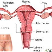 SEX – Vagina and Anus