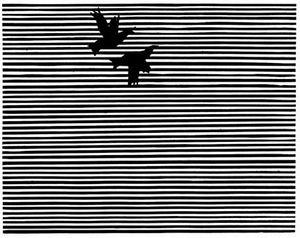 spaffordbird10.jpg