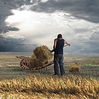 Farmer as Artist