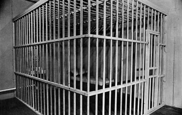 cage close.jpg