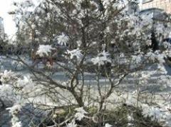 Jackson Square tree.jpg
