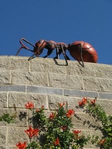 Them(Ant)