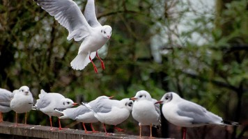 BirdsInCommunity