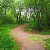 Which path is the right path?
