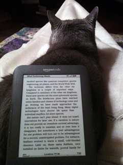 catkindle.jpg
