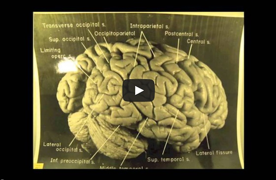 'Einstein's Brain'-Words by Heathcote Williams. Narration & Montage by Alan Cox.