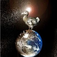 'The Last Dodo and Dreams of Flying'