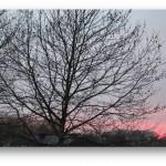 Diane's tree
