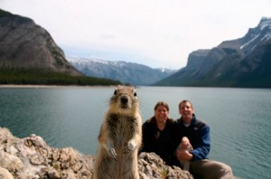 ground_squirrel_560