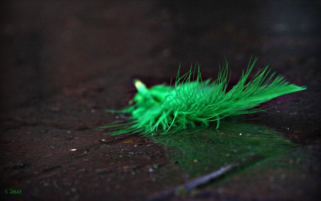 "Photo: ""The Green Feather"" by Sheree Zielke from Flickr. Used under Creative Commons license."