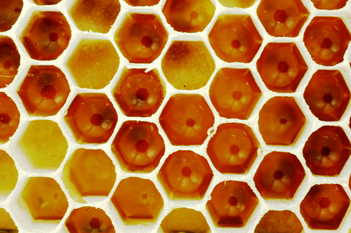 """Honeycomb"" by nene9 from Flickr. Used under Creative Commons license."
