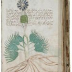 Why Are People – Especially Scholars – So Obsessed With The Voynich Manuscript?