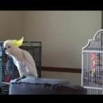 Study: Can Animals Dance?