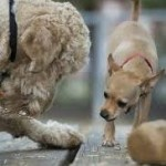 Dogs Have Grasp Of Deceit And Morality, Say Researchers (Dog Owners Already Knew)