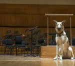 When Dogs Auditioned For The Baltimore Symphony