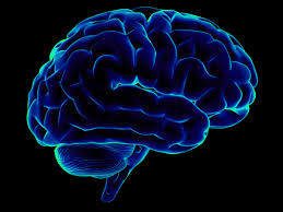 How Do Musicians' Brains Process Music? Some Insights…