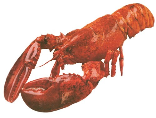 kosher lobster.jpg