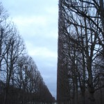 The perfectly groomed trees of Versailles