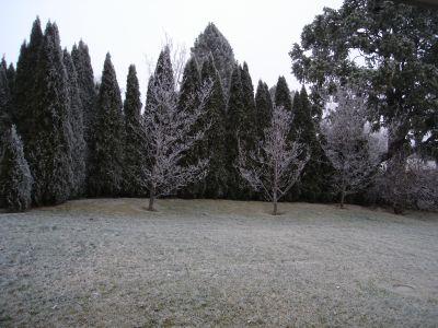 Frozen Fog 1.jpg