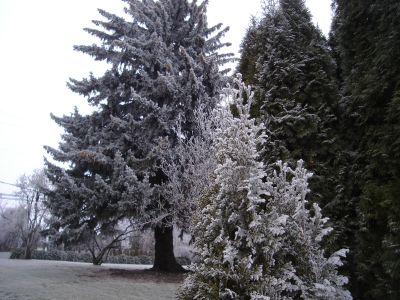 Frozen Fog 2.jpg