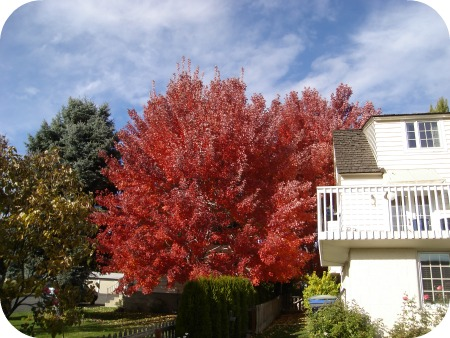 Maple, November 2012