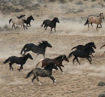 wild horses blog